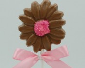 Chocolate Daisy Pop